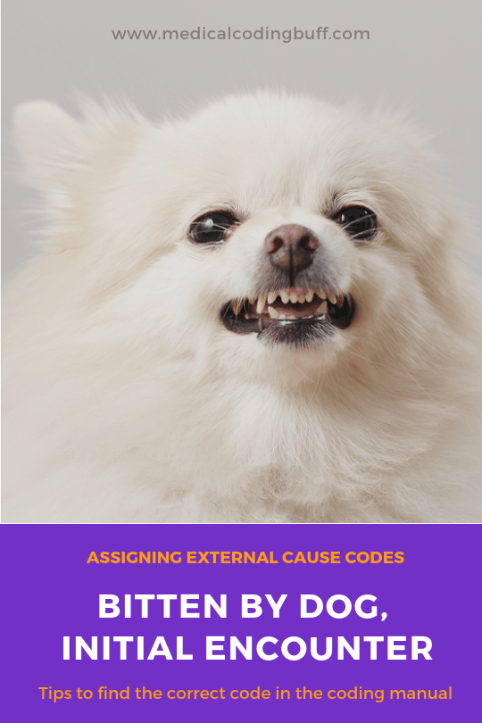 an angry dog and assigning external cause code for dog bite