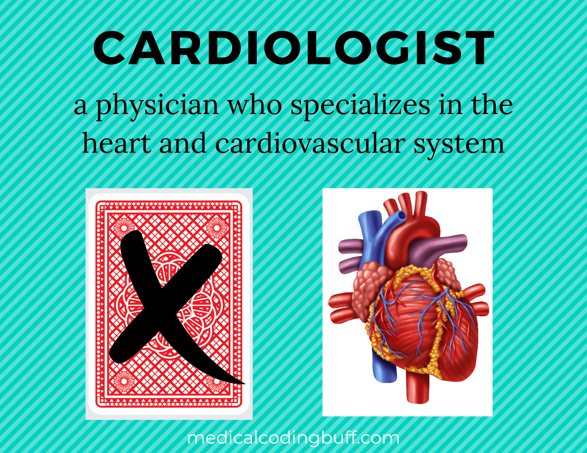 cardiologist specializes in the heart and cardiovascular system