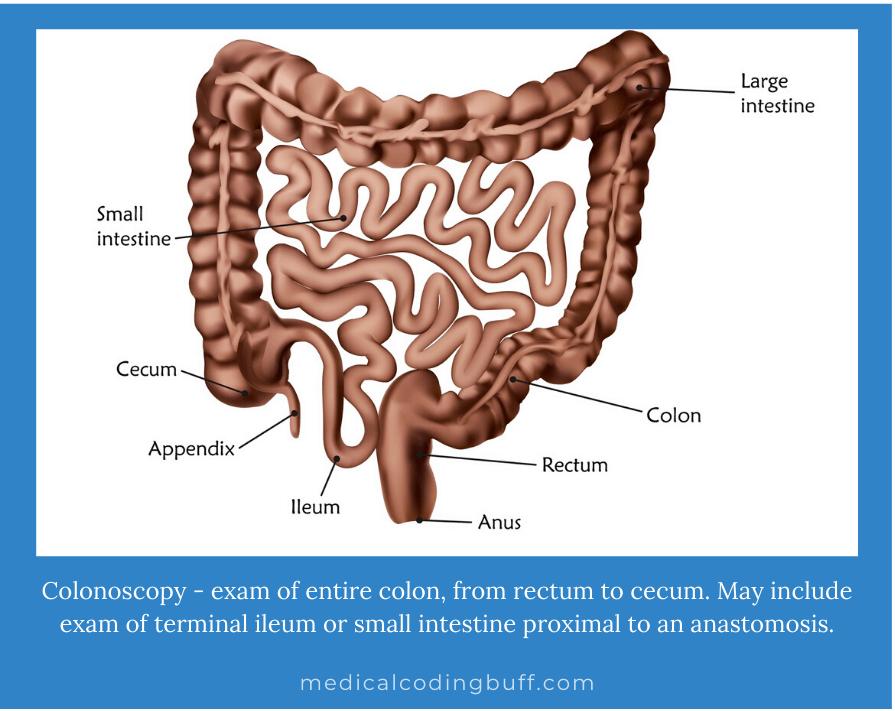 colonoscopy as the exam of entire colon