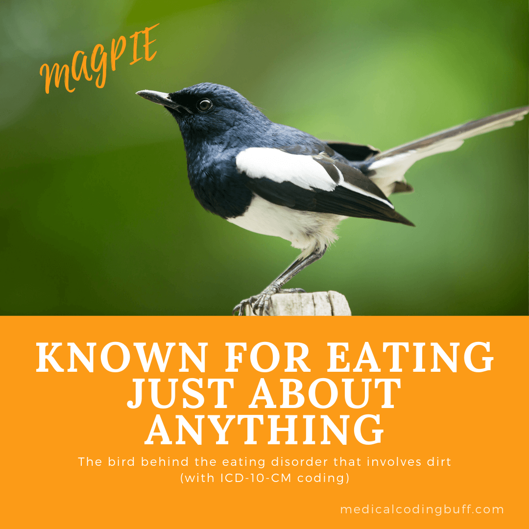 Pica comes from the magpie, known for its willingness to eat just about anything.